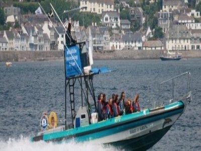 Orca Sea Safaris