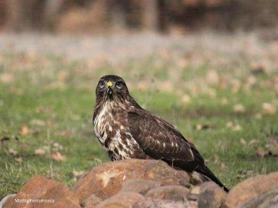 Camping Valderredible Ornitología