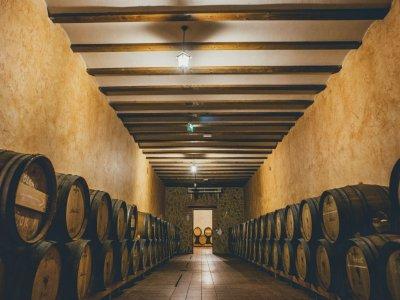 Wine tourism and tasting in Villagarcía del Llano