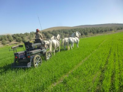Horse carriage ride and tasting Córdoba 2h