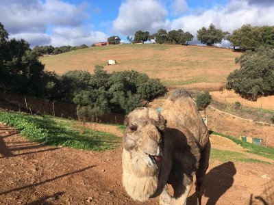 Farm and workshops for children in El Ronquillo