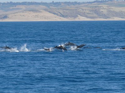 Whale watching and lunch by boat in Magón 4 h