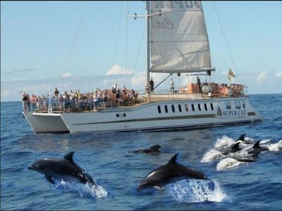 Cetacean sighting and boat meal children in Magón