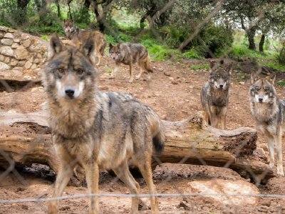 Guided tour of El Torcal and visit Lobo Park
