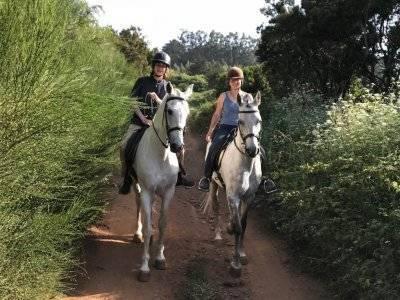 Horse riding advanced level La Esperanza 2 hours