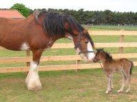 What a cute foal.