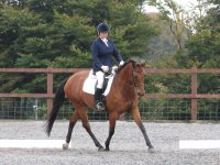 Open Dressage in West Somerset Riding Club.