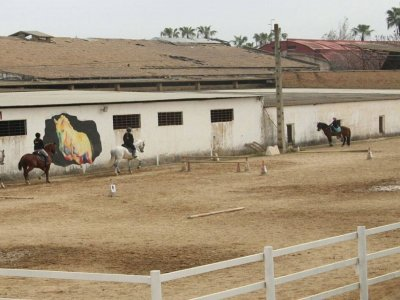 Horseback riding group San Juan de Aznalfarache 1h