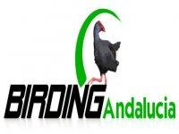 Birding Andalucia Team Building
