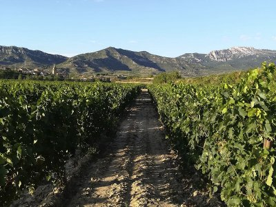 Two-seater quad route through vineyards in Aro 2h