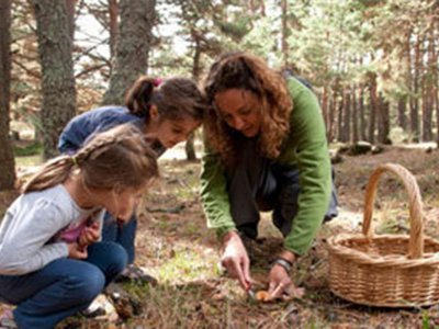 Family mycology route in Sierra de Madrid 2h