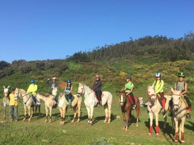 Horse riding route in La Laguna for beginners 1 h