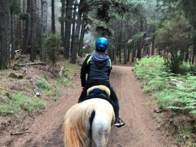 Horse riding route in La Laguna for experienced 1h