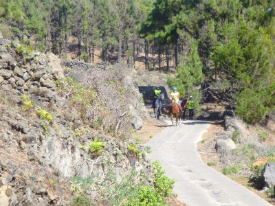 Horse riding route in La Laguna for experienced 2h