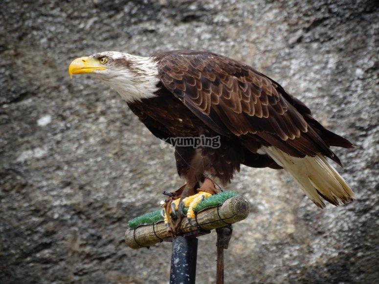 Perched falcon