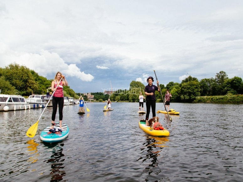 Paddleboarding in group