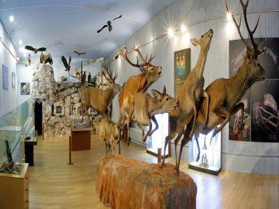 Museo de la Naturaleza Valle de Alberche