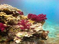 Stunning reef