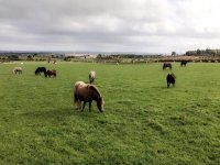 Visit our vast areas, Hooves & Paws