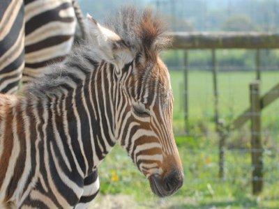 Folly Farm Zoos