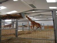 See the giraffe.