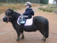 We have ponies suitable for younger children