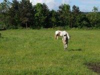 The ponies at Houston Farm Riding School