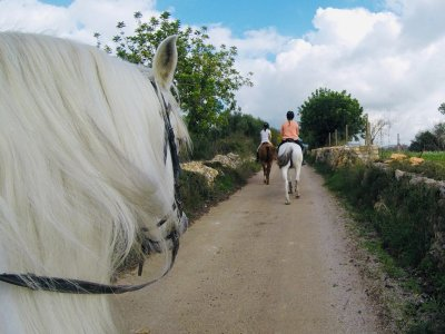 Horse riding route for beginners through Son Negre 1h
