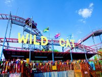 Do you dare to try the Wild Cat?!