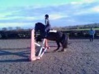 Professional jumping tuition