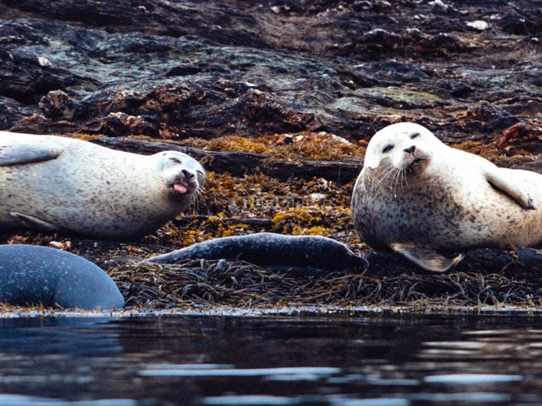 Seals are smiling