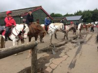 have a go with Scottish Equestrian Hotel !