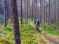 Forest Mountain biking Scotland