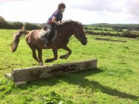 Showjumping for Beginners!