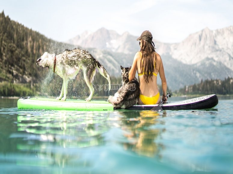 Sup Adventures with your dog.