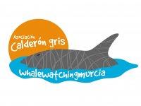 Nauticum Charter Avistamiento de Cetáceos