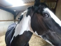 Meet our friends in Aberconwy Equestrian Centre!