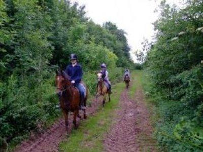 Triley Fields Equestrian Centre