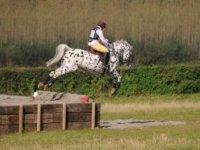 Our stallion