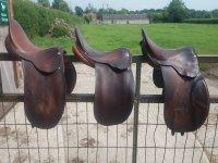 Saddle horse!