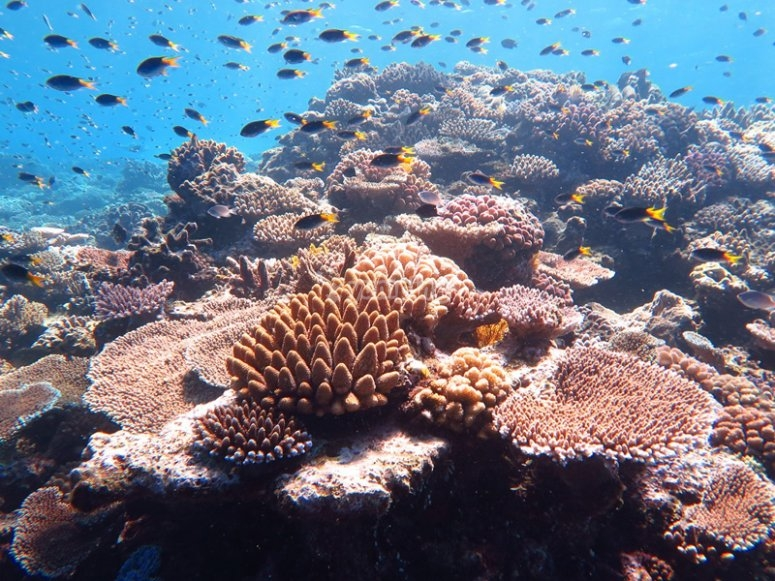Help preserve these beautiful habitats