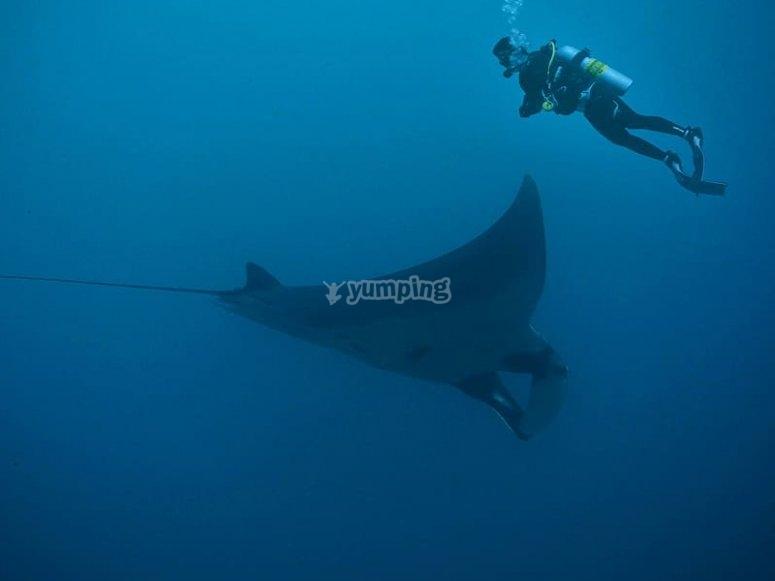 Dive to deeper depths!