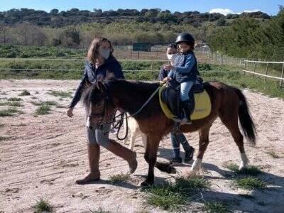 AP Sport Horses