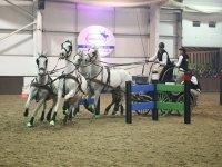 Top level competitons at Bury Farm Equestrian Centre