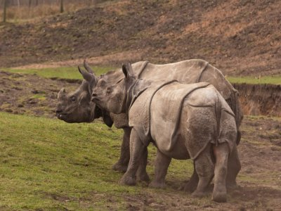 West Midlands Safari Zoos