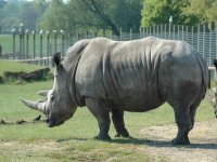 Rhinos are a great sight to see.