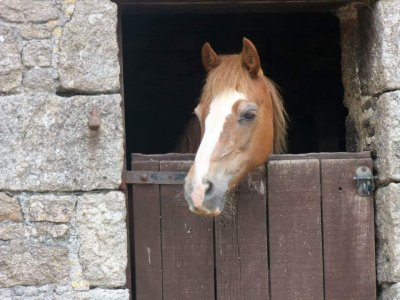 Bosvathick Riding Stables