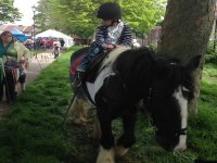 Horse Walkout Session for Kids in Hambrook for 1h