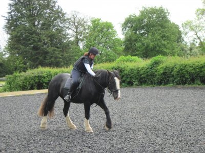 Horse Walkout and Free Horse Lesson in Hambrook 1h