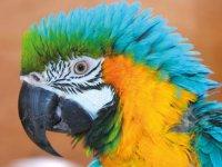 Visit the parrots.